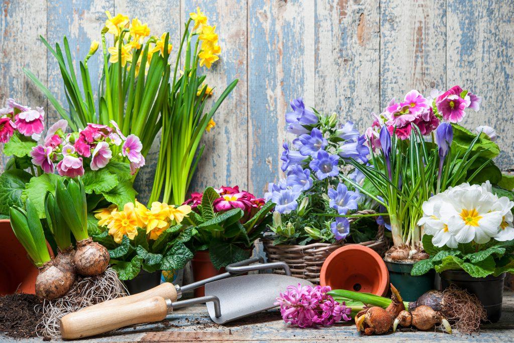 Spring Gardening Top 10 Tips The A Plan Blog